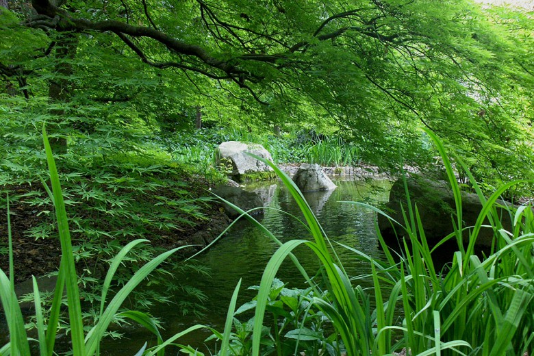 Viridis Japanese Maple over Stream, Garden Architects, Inc.